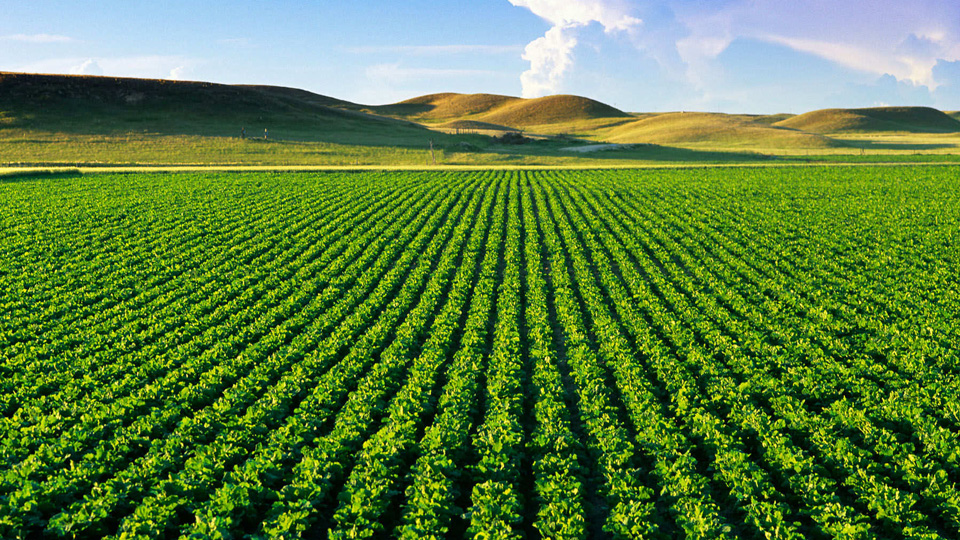 Crops-might-end-up-increasing-level-of-CO2