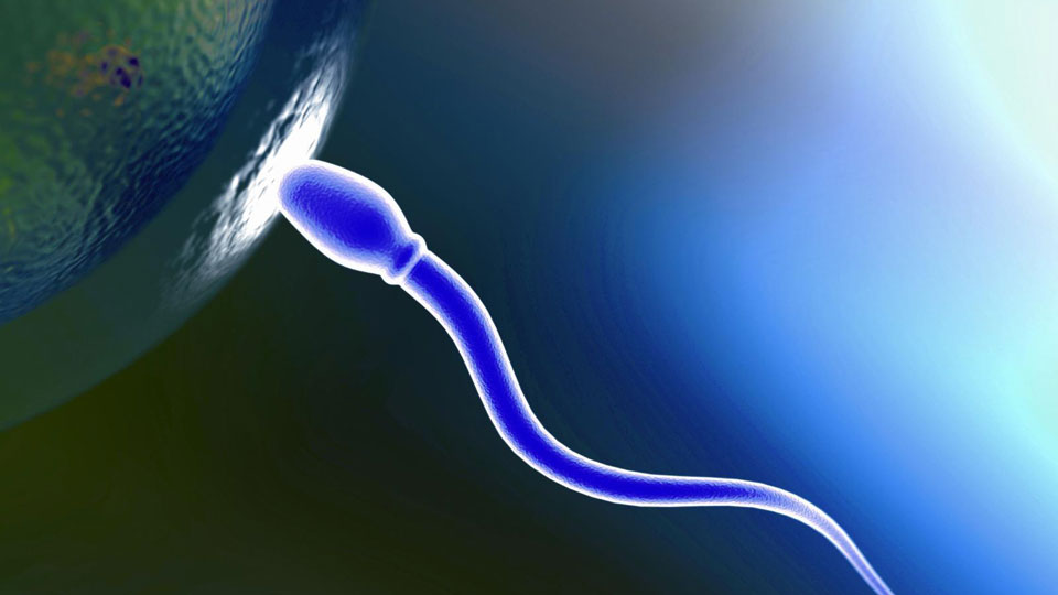 Scientists-use-skin-cells-to-create-artificial-sperm-and-eggs