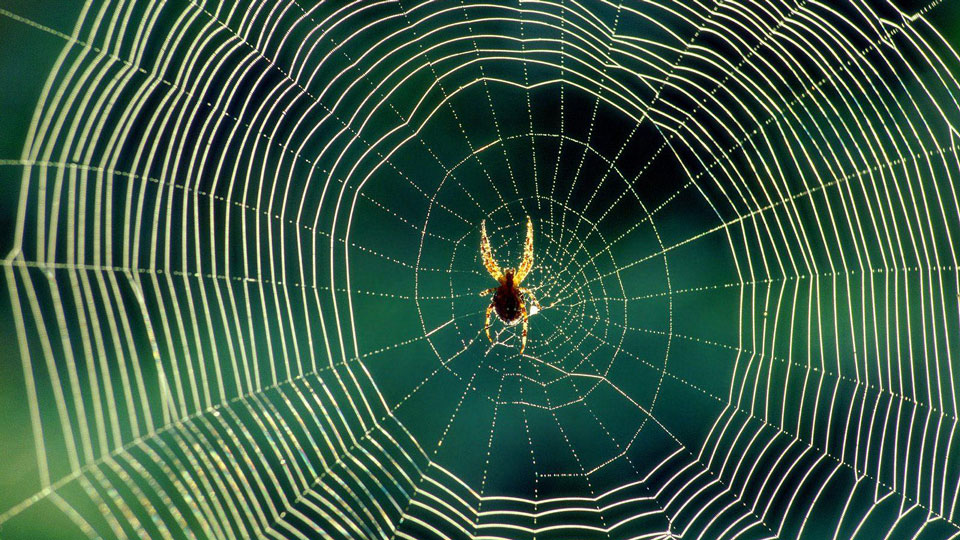 Spider-spins-electrically-charged-web