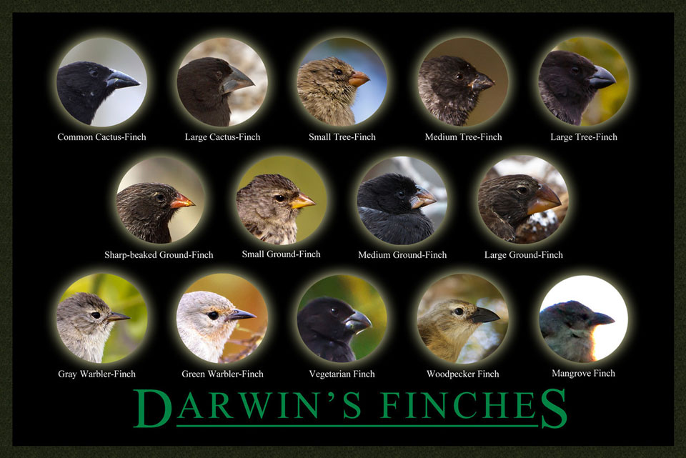 What Animals Did Charles Darwin Study? | Reference.com