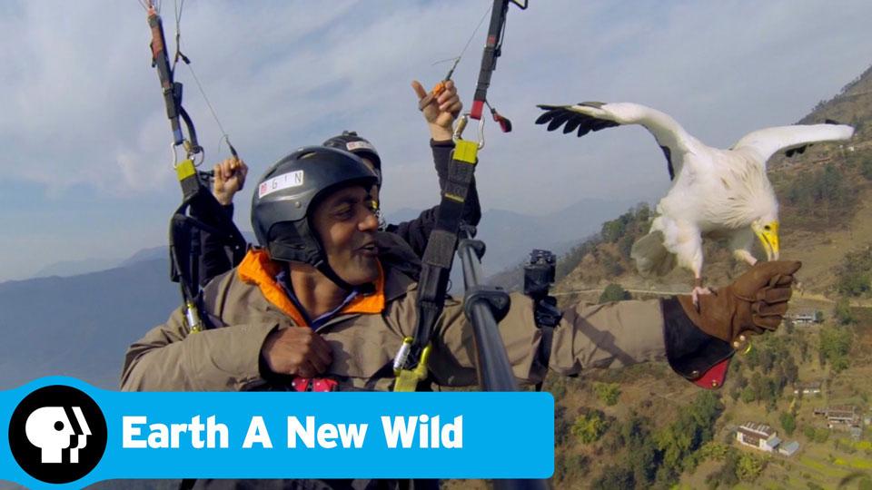 Earth-a-New-Wild-pbs