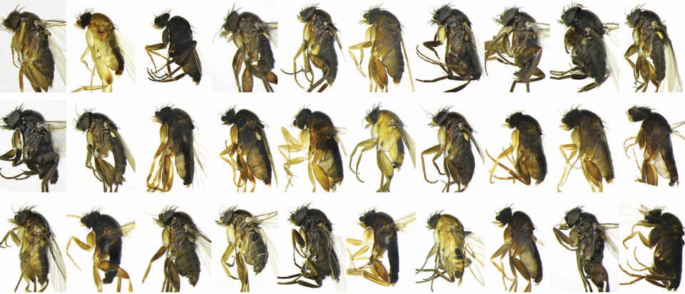 30-new-Species