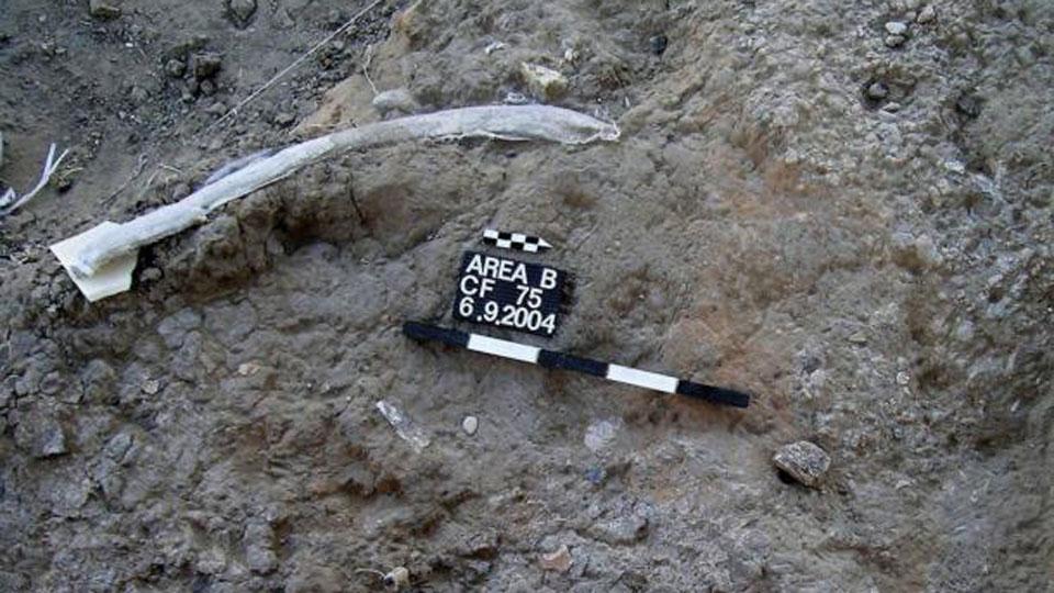 Tools-reveal-cavemen-butchered-elephants