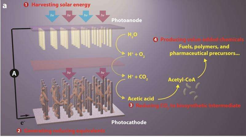 Artificial Photosynthesis 3