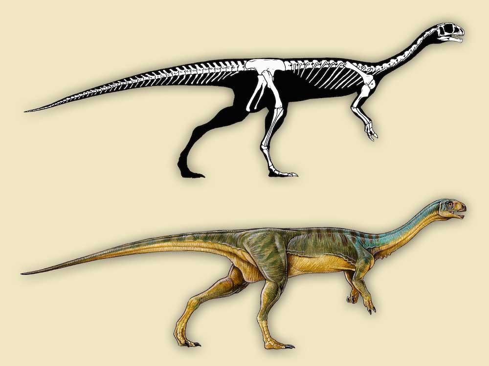 Chilesaurus-diegosuarezi