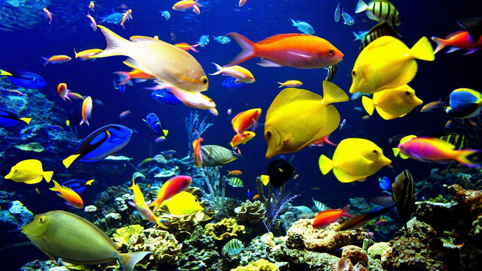 Climate-Change-Could-Harm-Marine-Life