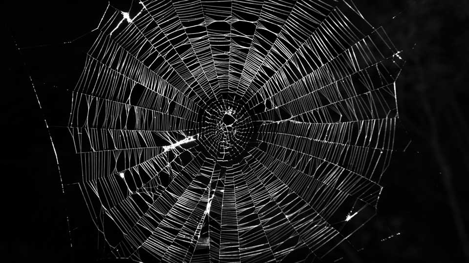 Carbon-infused-spider-web