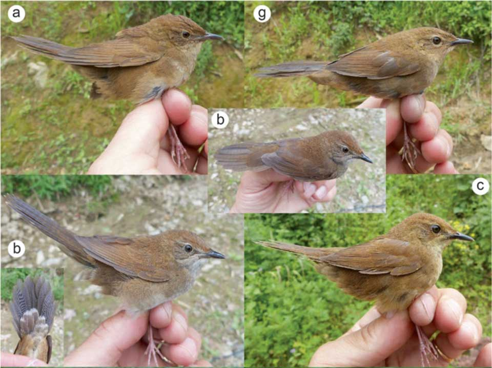 New-Bird-species