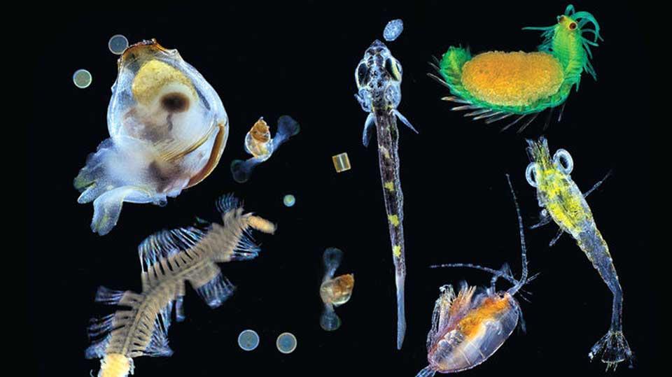 Tiniest-Organisms
