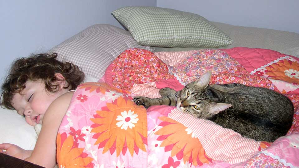 Toxoplasma-gondii-Cat-Feces-Schizophrenia