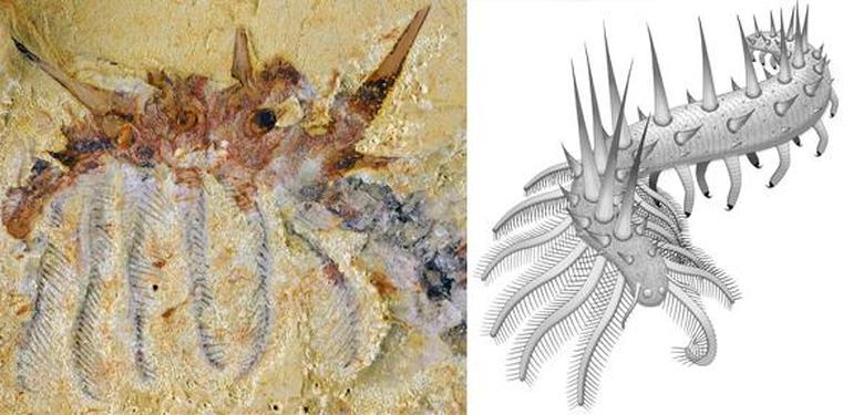 Prehistoric Worm