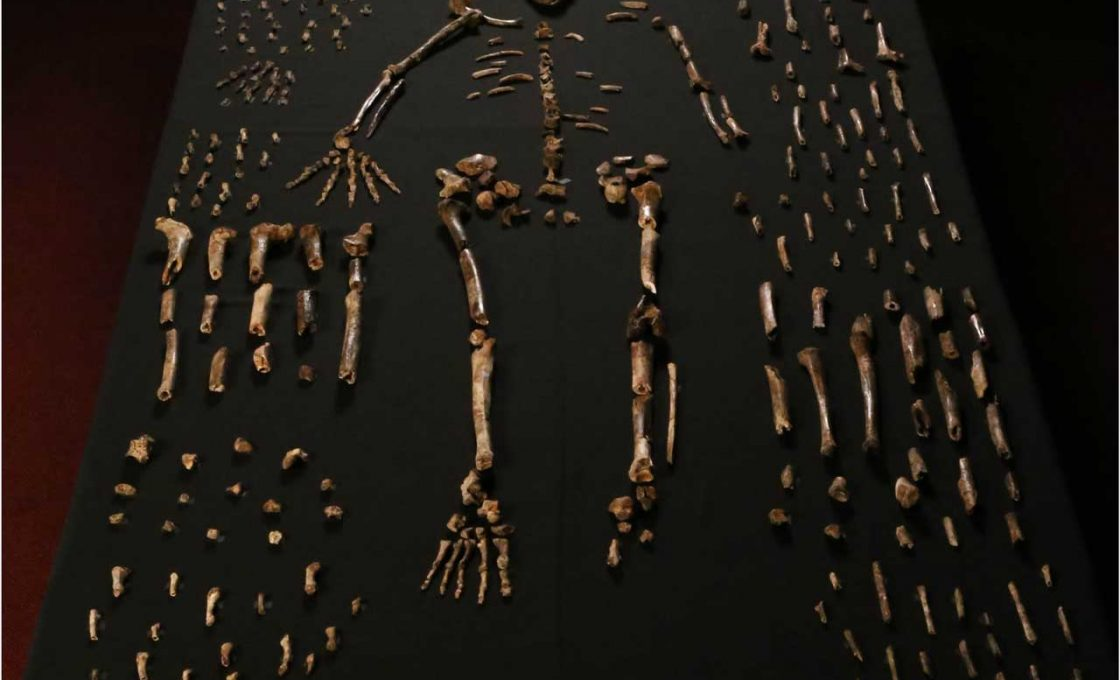 HoMo-Naledi-South-Africa-1