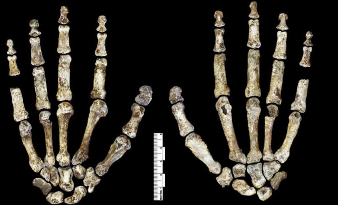 HoMo-Naledi-South-African