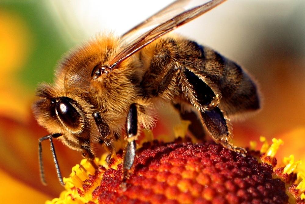 Bee-hoops