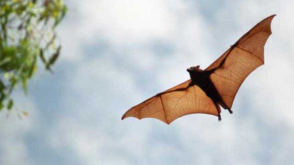 bats-wings-upside-down
