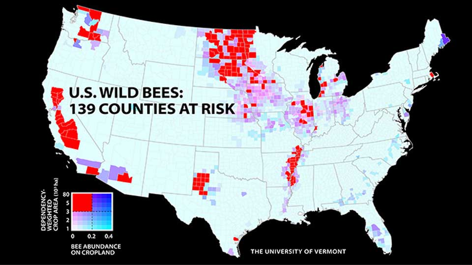 wild-bees-population-falling-US-Crop-production
