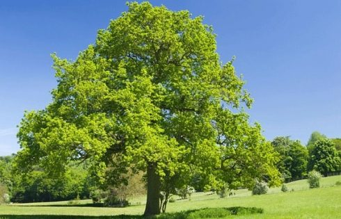 Why Planting trees to Stop Global Warming may not work